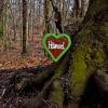 Lost in the Forest Foto: Daniel Senzek
